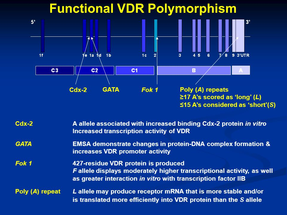 Functional VDR Polymorphism