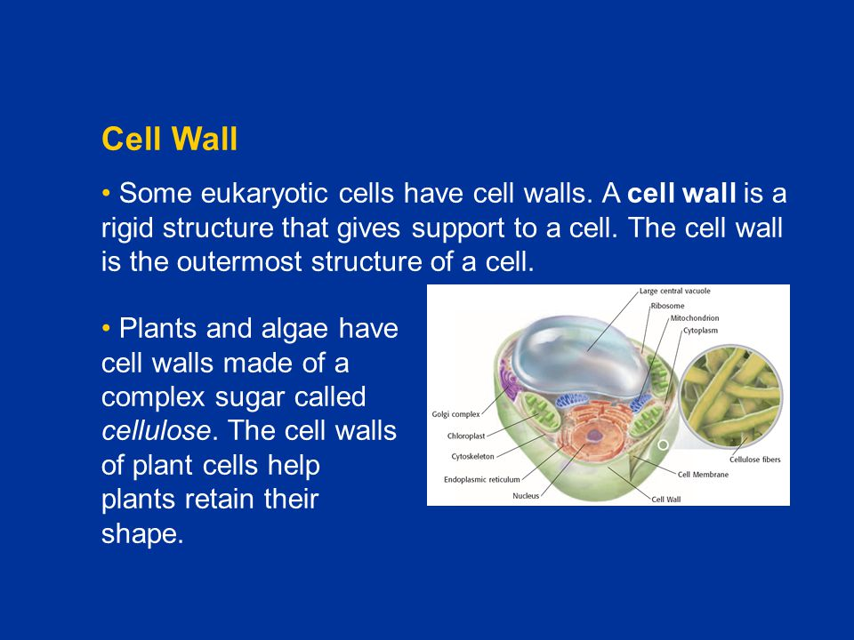 Chapter C1 Cell Wall.
