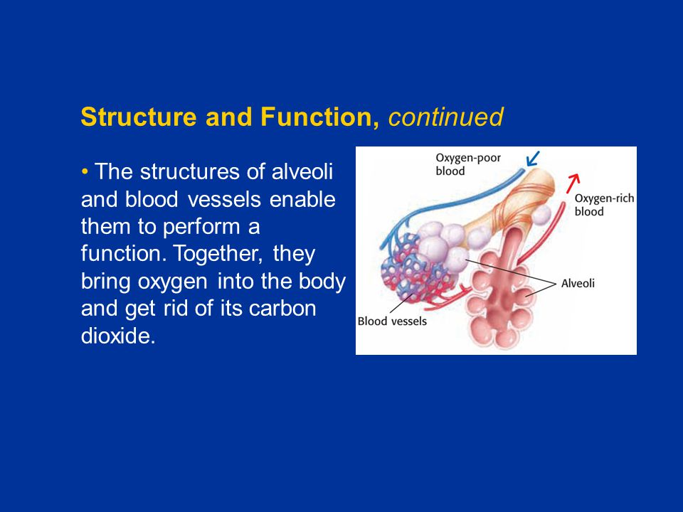 Structure and Function, continued