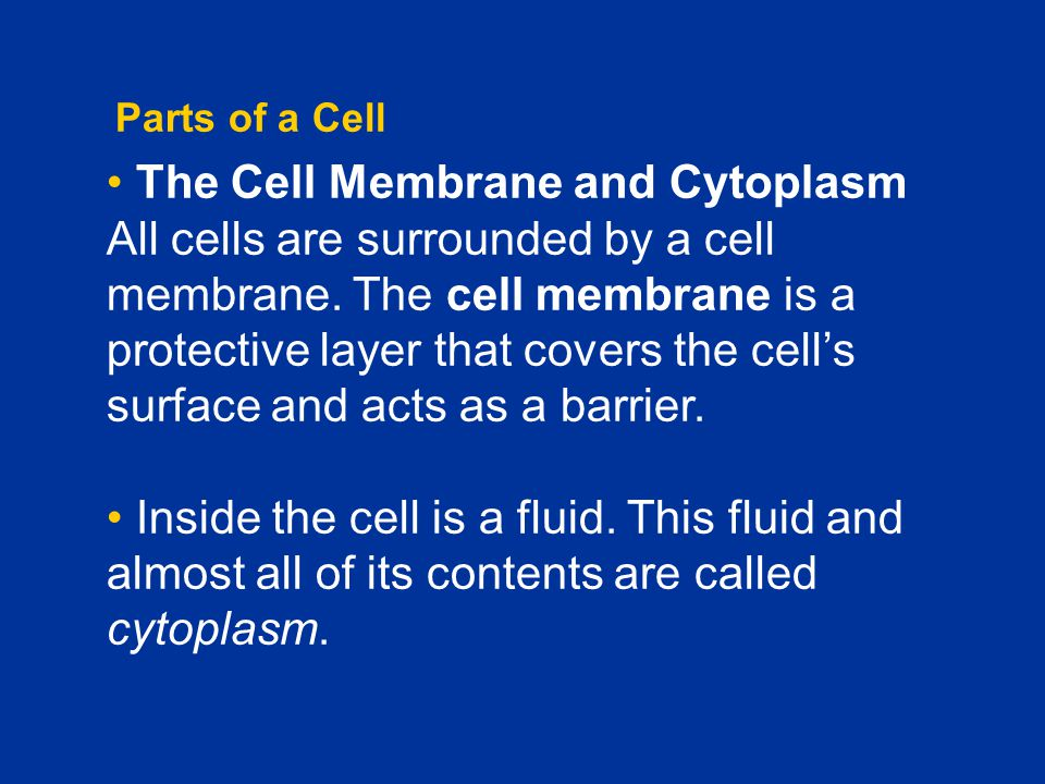 Chapter C1 Parts of a Cell.