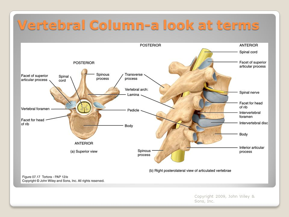 Vertebral Column-a look at terms