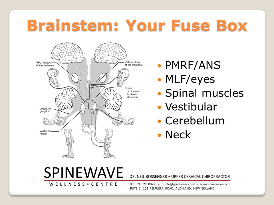 Brainstem: Your Fuse Box