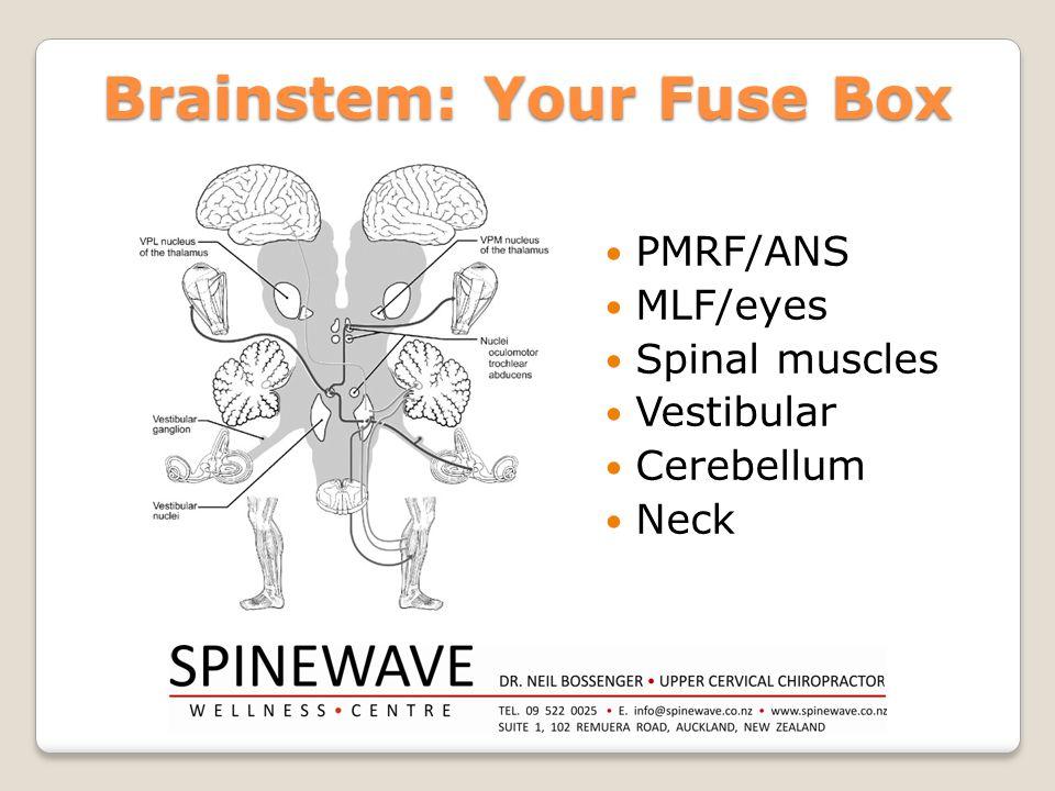 Brainstem: Your Fuse Box