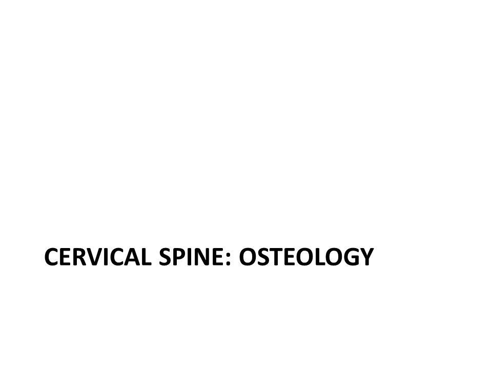 Cervical spine: Osteology
