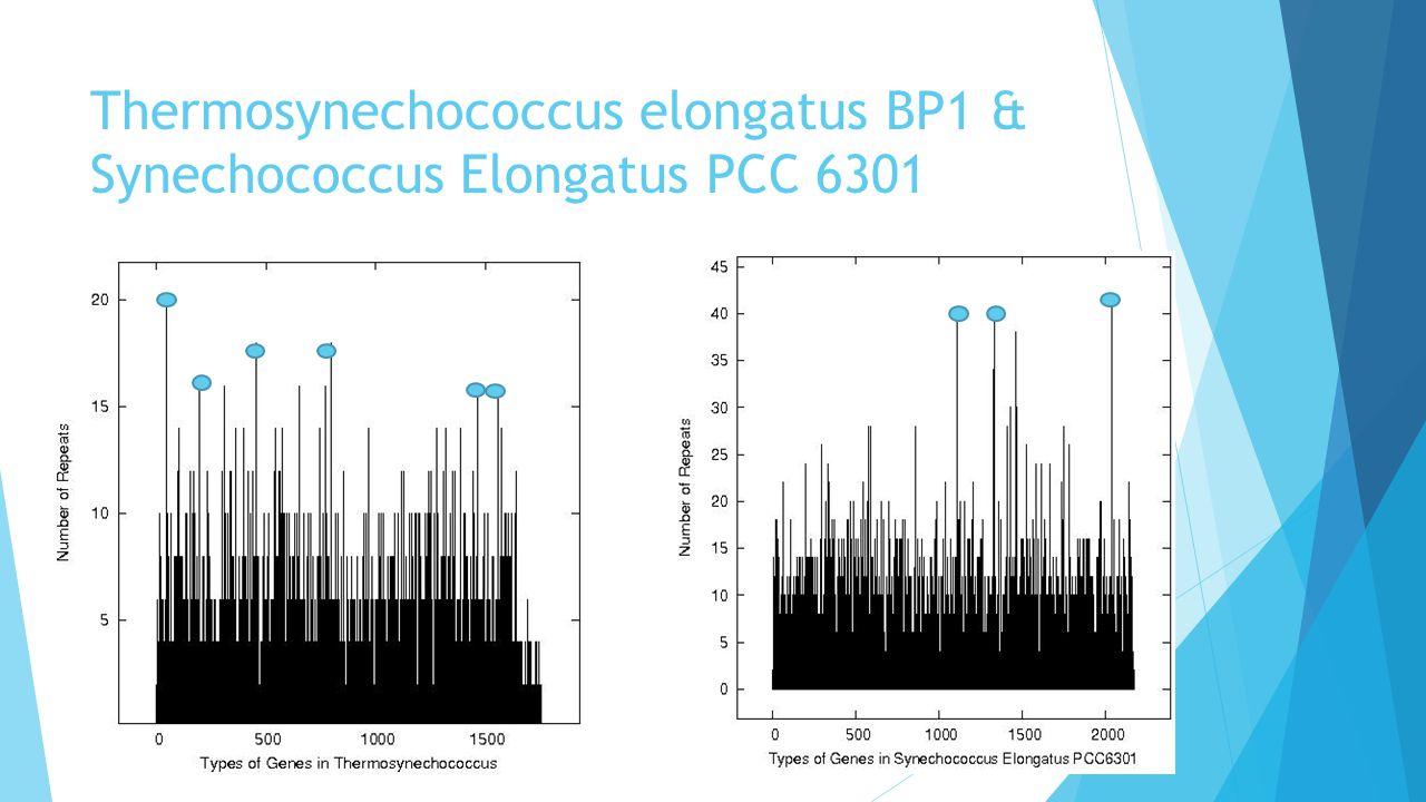 Thermosynechococcus elongatus BP1 & Synechococcus Elongatus PCC 6301