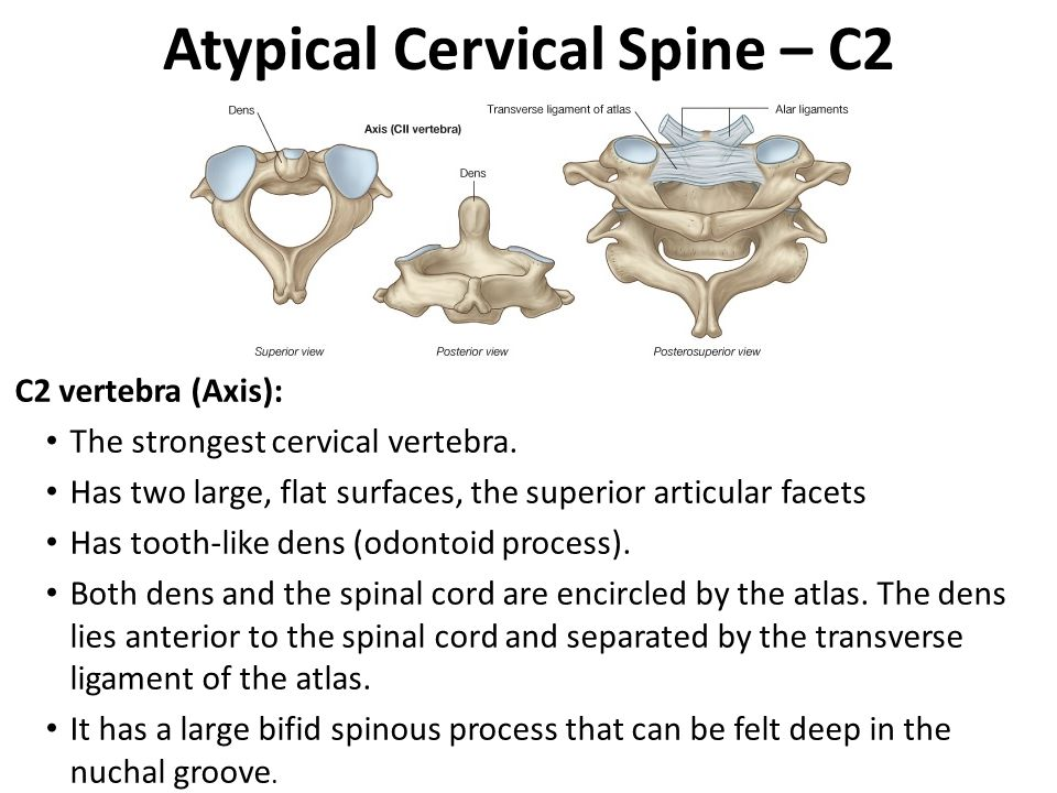 Atypical Cervical Spine – C2