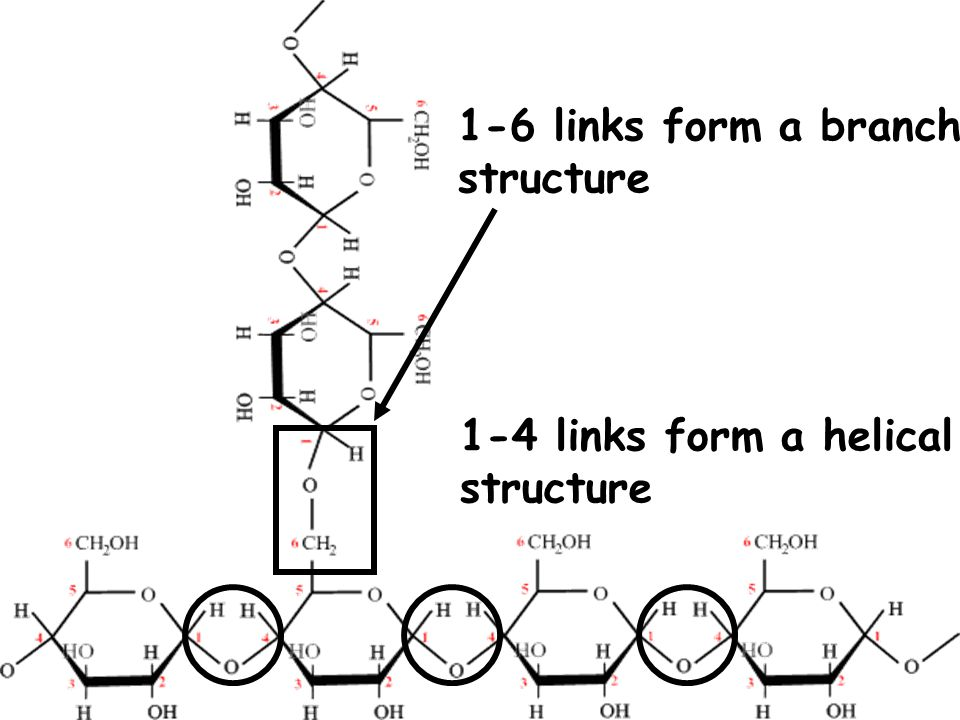 1-6 links form a branch structure 1-4 links form a helical structure