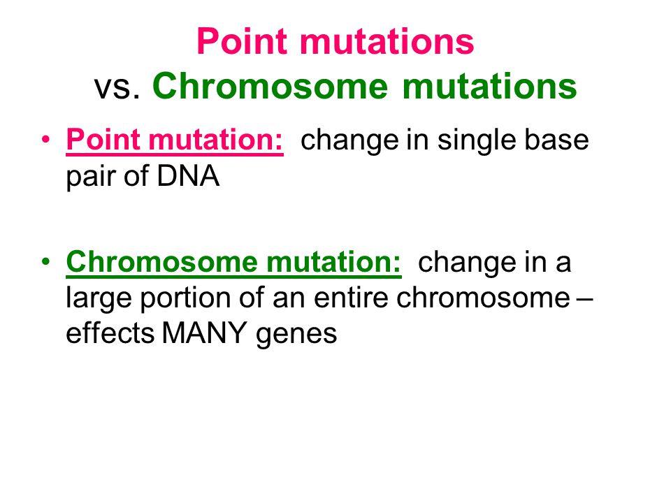 Point mutations vs. Chromosome mutations