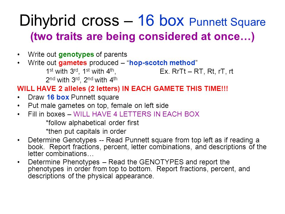 Dihybrid cross – 16 box Punnett Square (two traits are being considered at once…)