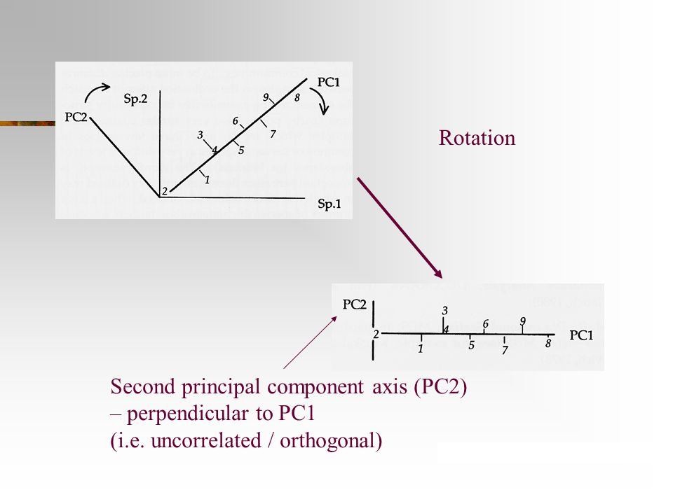 Rotation Second principal component axis (PC2) – perpendicular to PC1 (i.e.