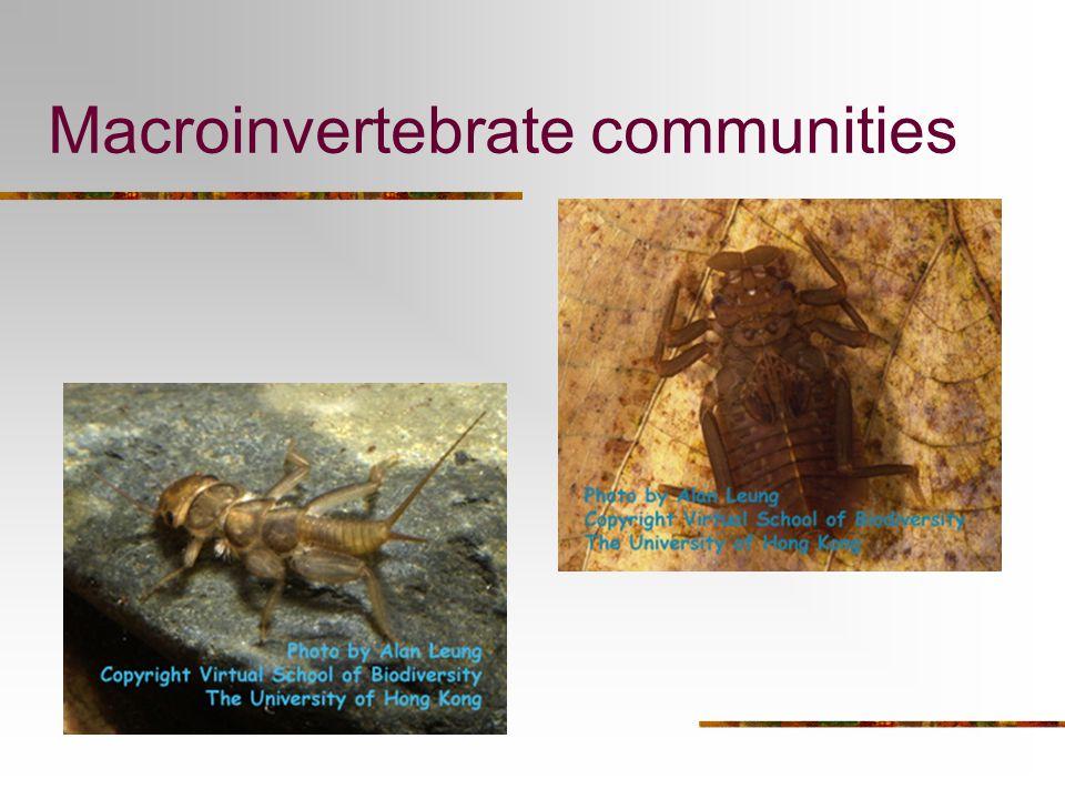 Macroinvertebrate communities