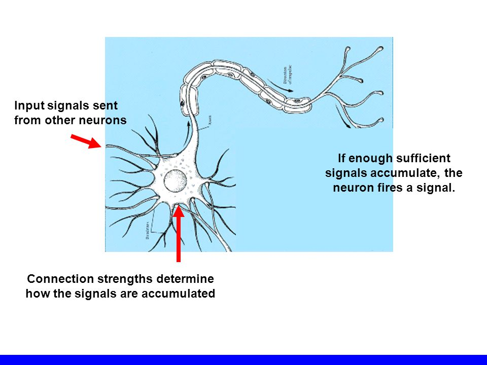 If enough sufficient signals accumulate, the neuron fires a signal.