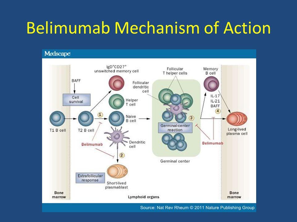 Belimumab Mechanism of Action