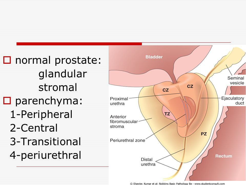 normal prostate: glandular stromal parenchyma: 1-Peripheral 2-Central 3-Transitional 4-periurethral