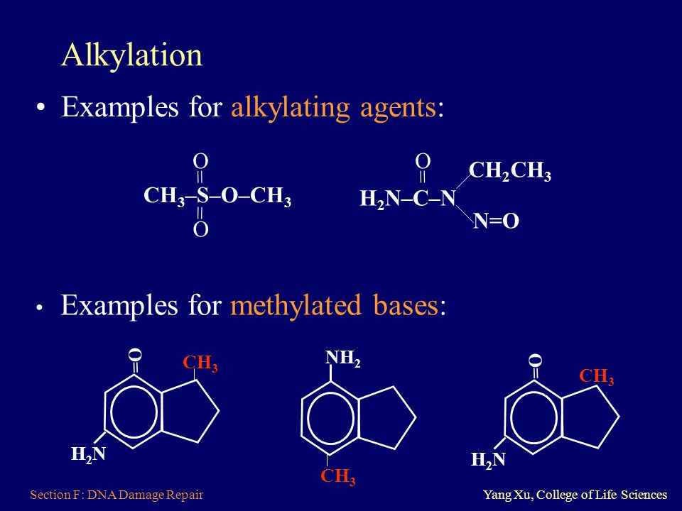 Alkylation Examples for alkylating agents: O CH2CH3 = CH3–S–O–CH3