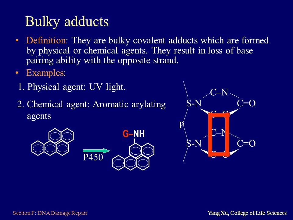 Bulky adducts