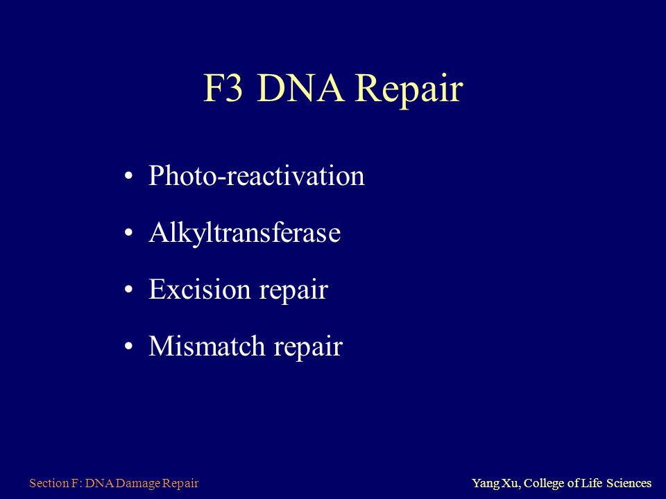 F3 DNA Repair Photo-reactivation Alkyltransferase Excision repair