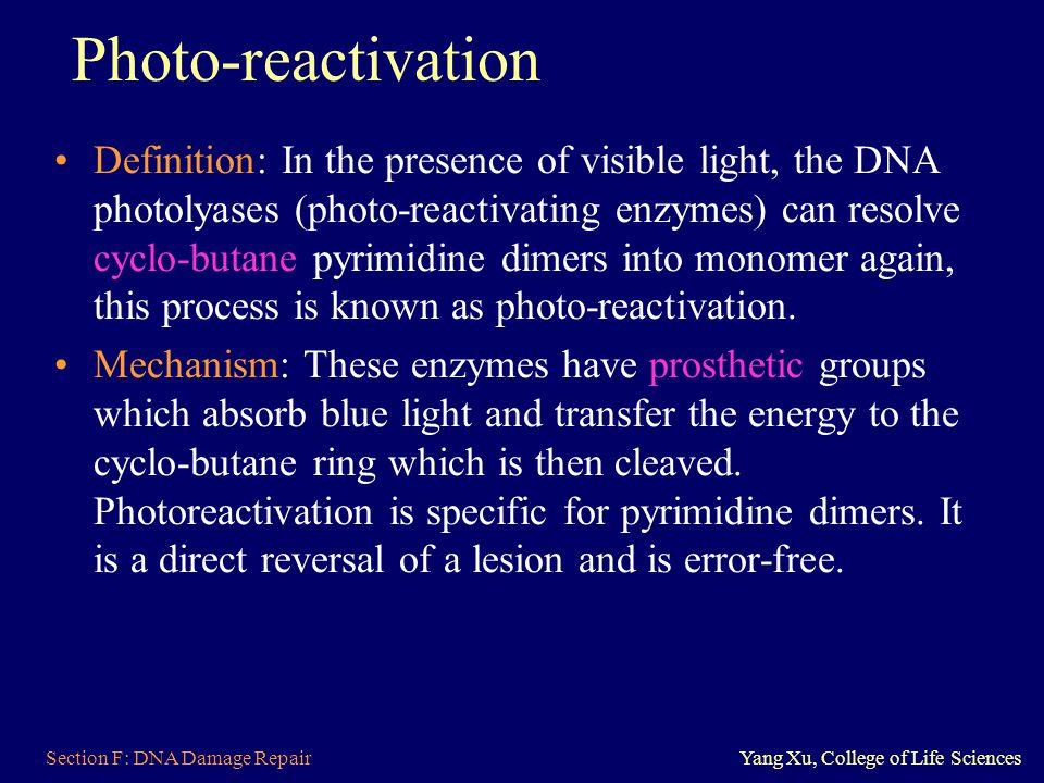 Photo-reactivation