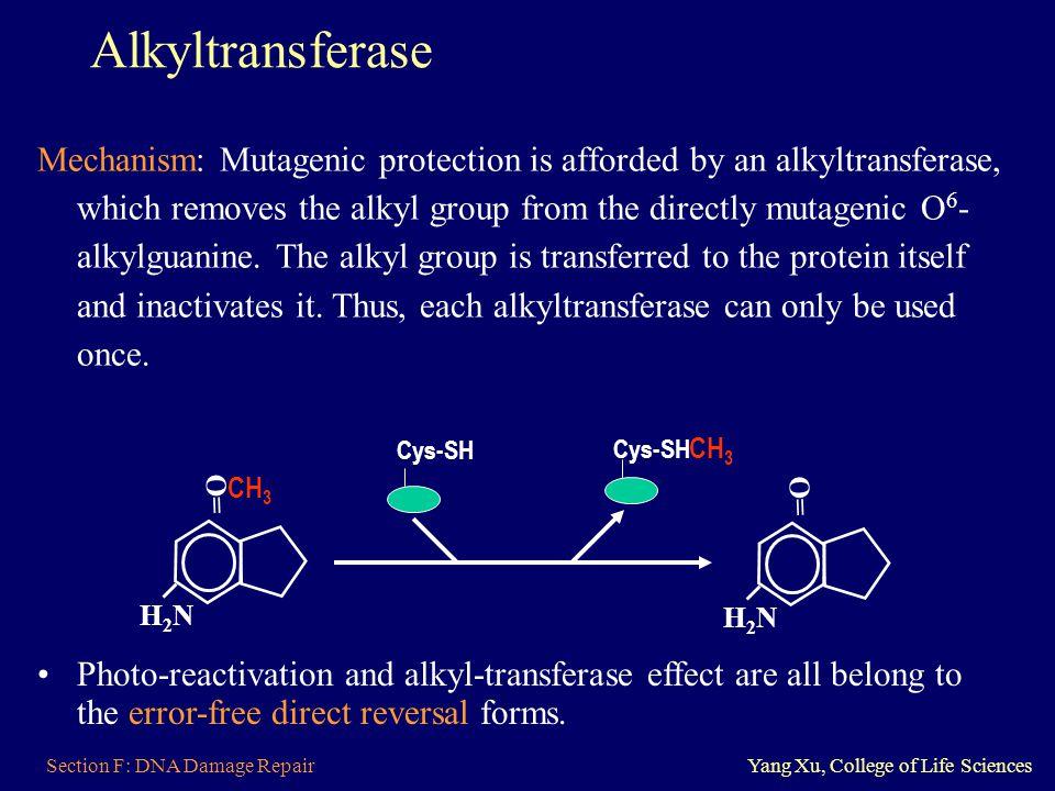 Alkyltransferase