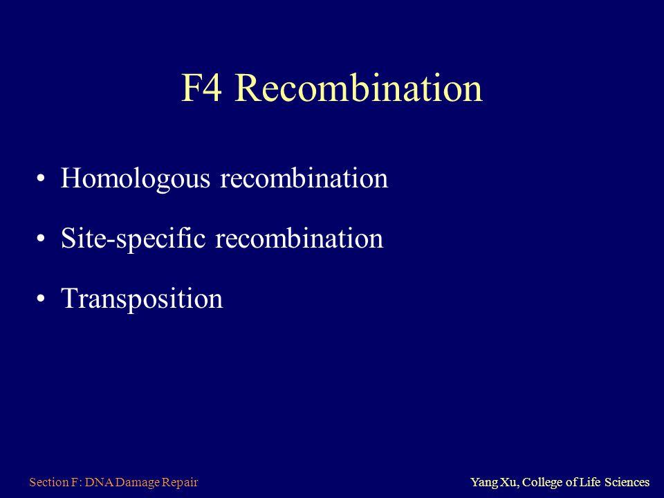 F4 Recombination Homologous recombination Site-specific recombination