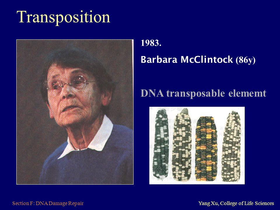 Transposition DNA transposable elememt 1983. Barbara McClintock (86y)
