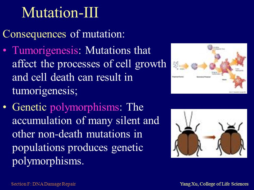 Mutation-III Consequences of mutation: