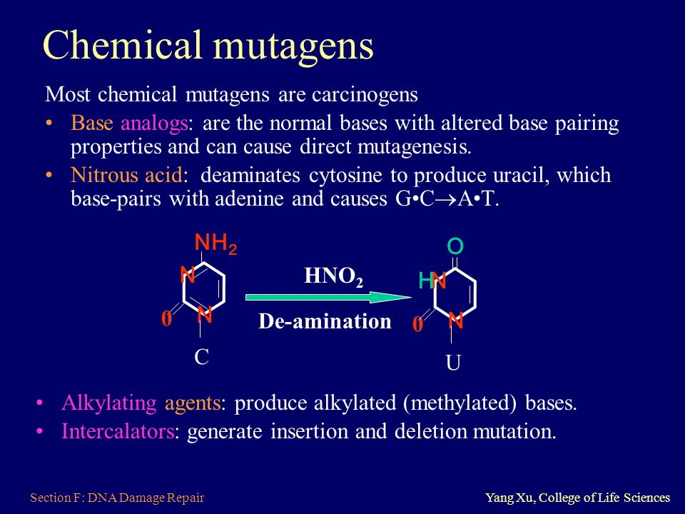 Chemical mutagens Most chemical mutagens are carcinogens