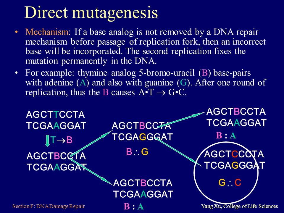 Direct mutagenesis