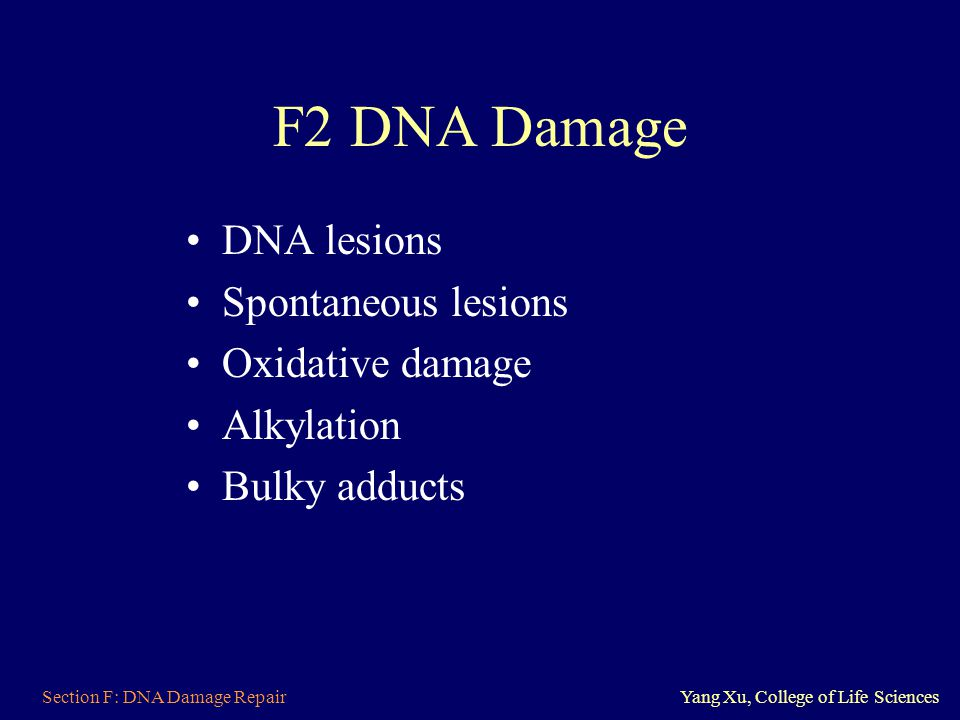 F2 DNA Damage DNA lesions Spontaneous lesions Oxidative damage