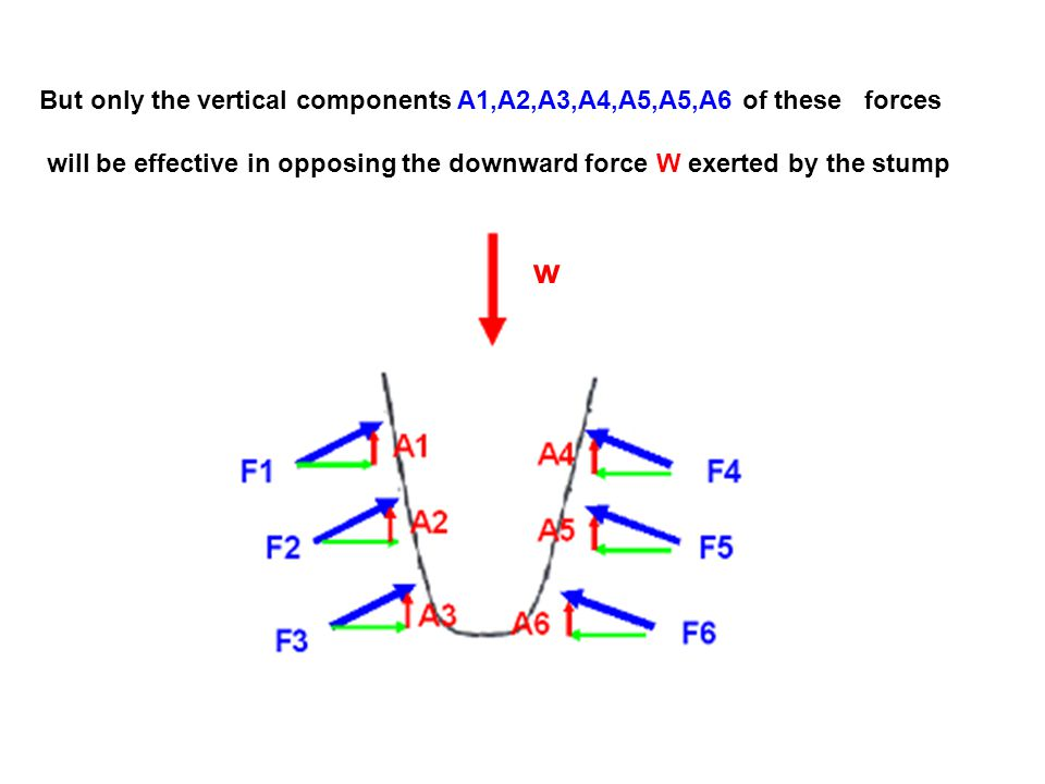 But only the vertical components A1,A2,A3,A4,A5,A5,A6 of these forces