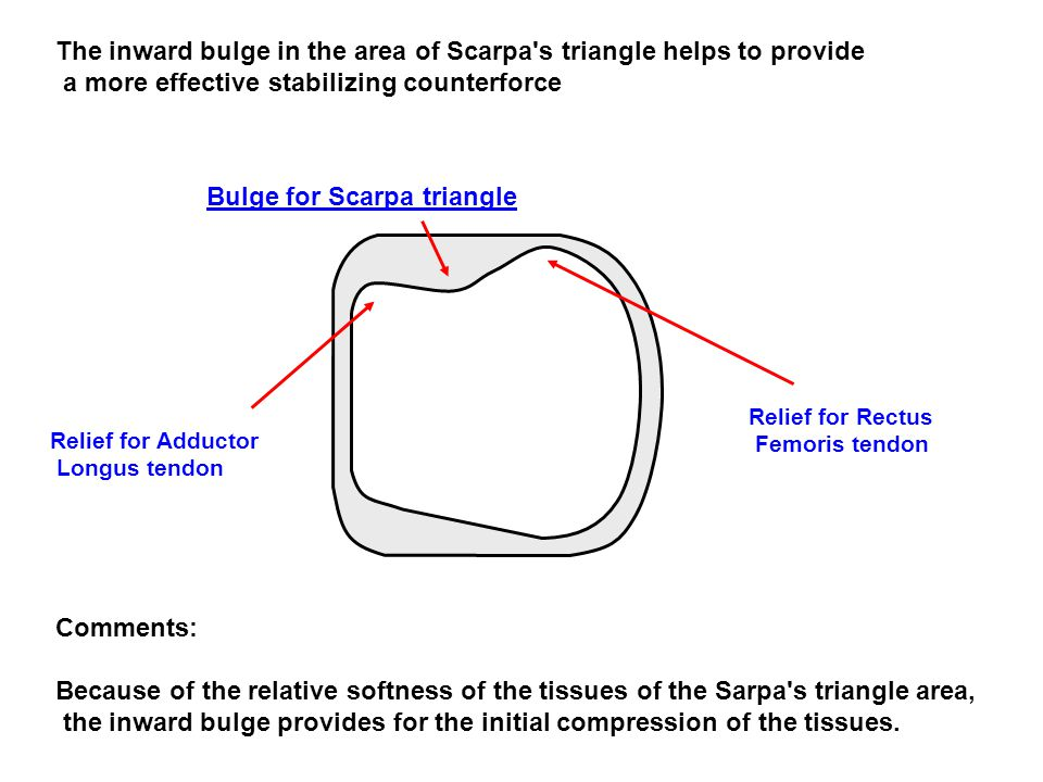 The inward bulge in the area of Scarpa s triangle helps to provide