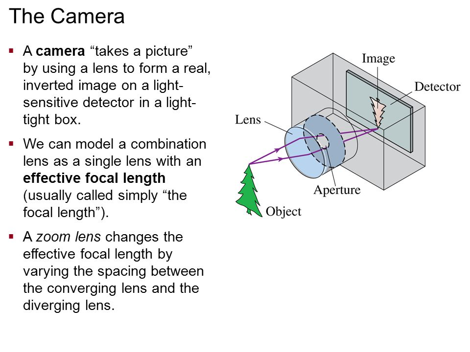 The Camera A camera takes a picture by using a lens to form a real, inverted image on a light-sensitive detector in a light-tight box.