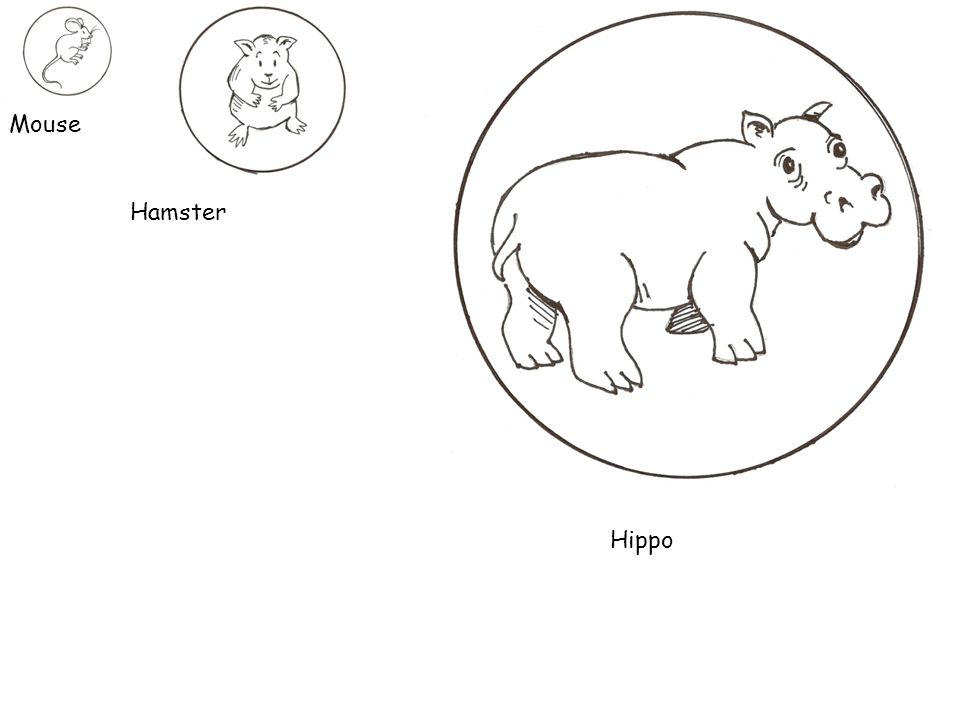 Mouse Hamster Hippo