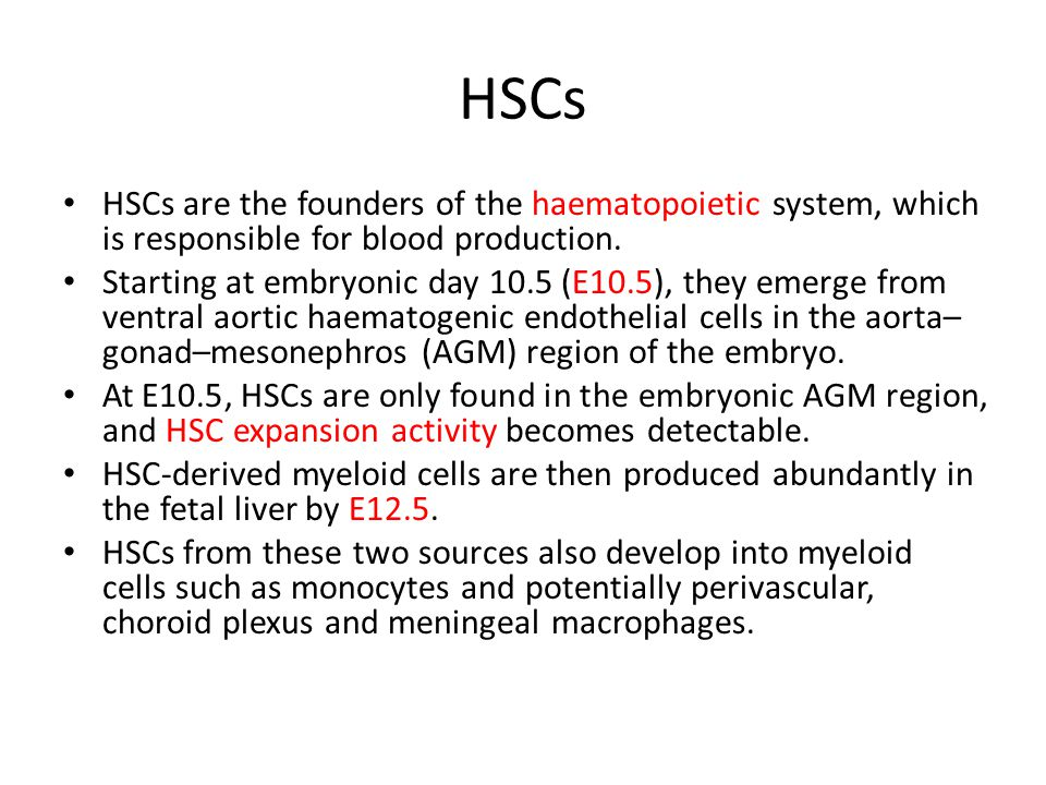 HSCs HSCs are the founders of the haematopoietic system, which is responsible for blood production.
