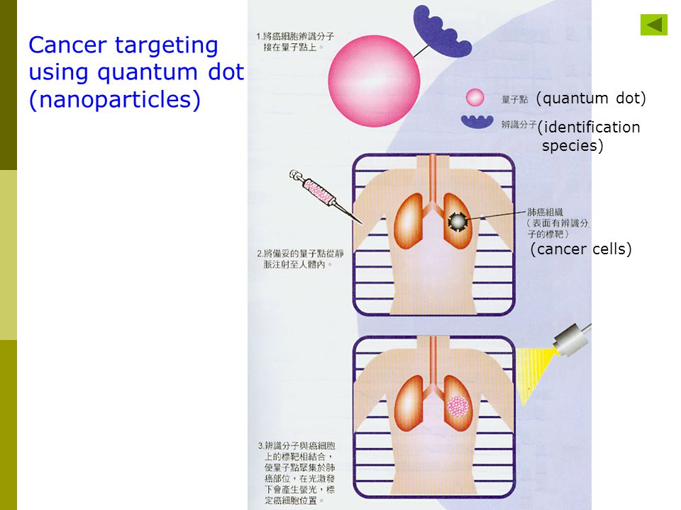 Cancer targeting using quantum dot (nanoparticles) (quantum dot)