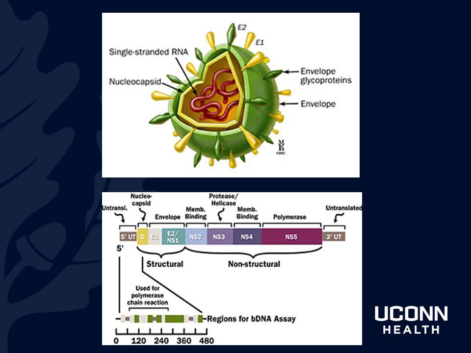 Hepatitis C classification—this is a Flaviviridae virus