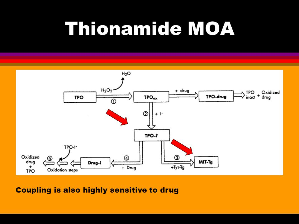 Thionamide MOA Coupling is also highly sensitive to drug