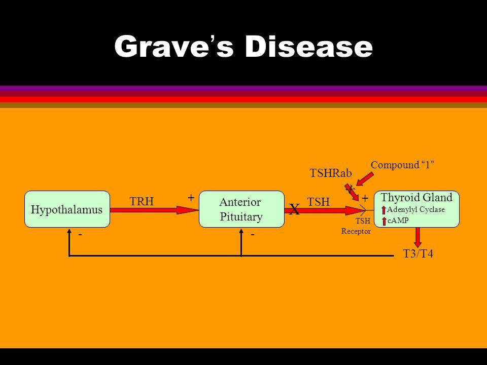 Grave's Disease X TSHRab Hypothalamus TRH + Anterior Pituitary TSH +