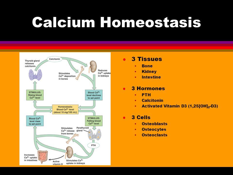 Calcium Homeostasis 3 Tissues 3 Hormones 3 Cells Bone Kidney Intestine