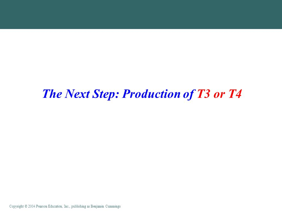The Next Step: Production of T3 or T4