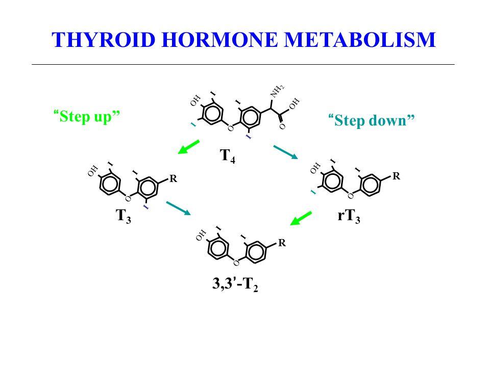 THYROID HORMONE METABOLISM