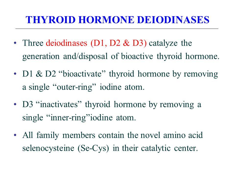 THYROID HORMONE DEIODINASES