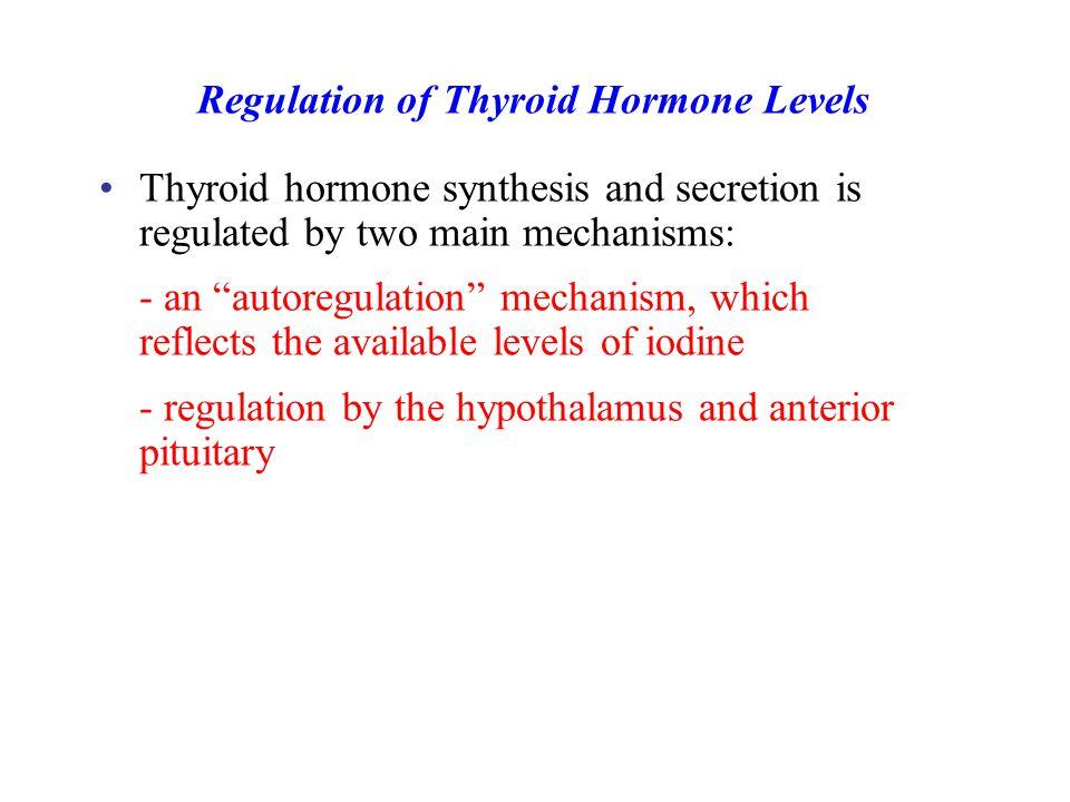 Regulation of Thyroid Hormone Levels