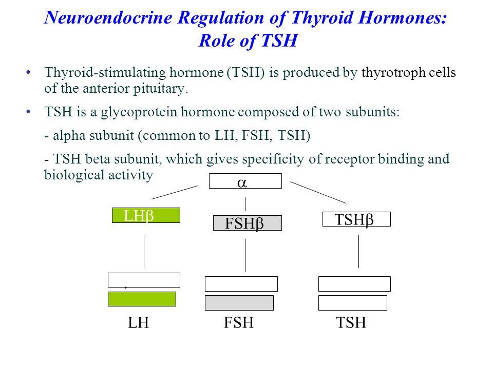 Neuroendocrine Regulation of Thyroid Hormones:
