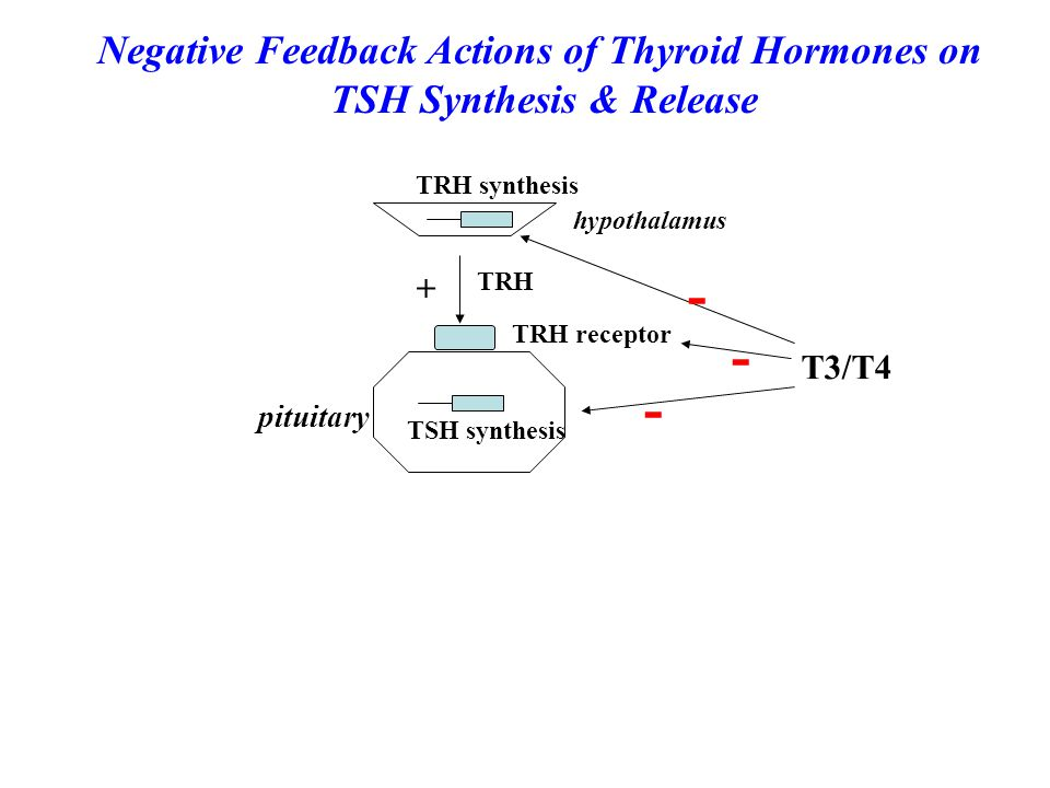 - Negative Feedback Actions of Thyroid Hormones on