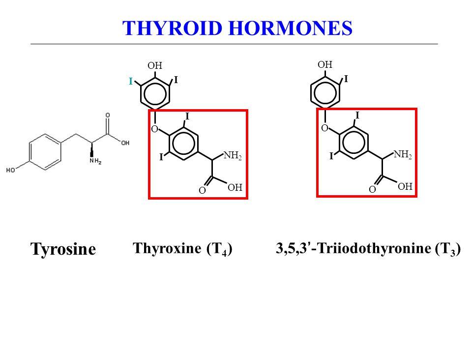 THYROID HORMONES Tyrosine Thyroxine (T4) 3,5,3'-Triiodothyronine (T3)
