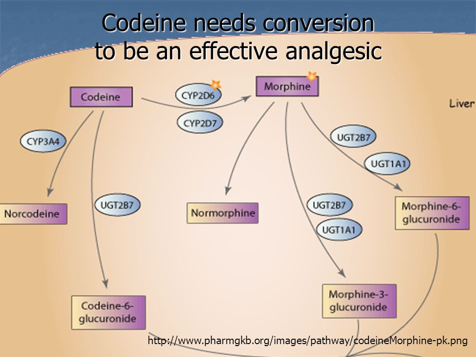 Codeine needs conversion to be an effective analgesic