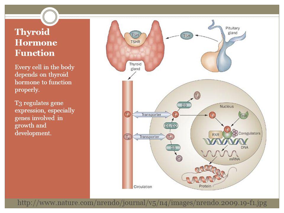 Thyroid Hormone Function