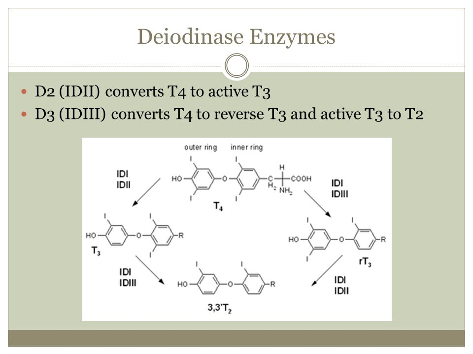 Deiodinase Enzymes D2 (IDII) converts T4 to active T3