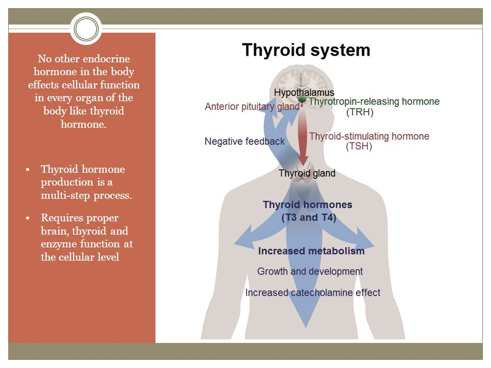 No other endocrine hormone in the body effects cellular function in every organ of the body like thyroid hormone.